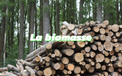 Tout ce que vous devez savoir sur la biomasse