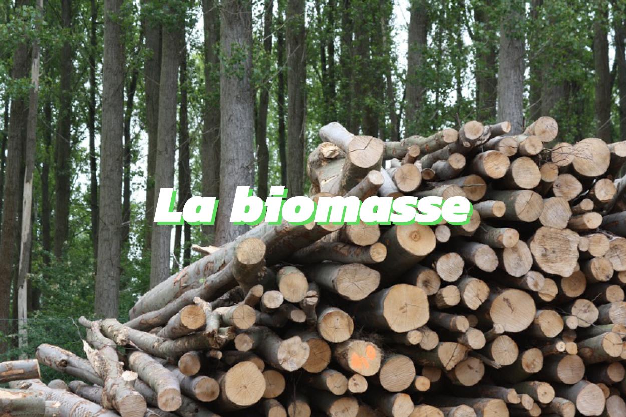 Qu'est ce que la biomasse ?
