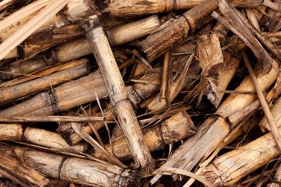 Les différentes sortes de biomasse