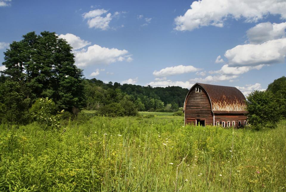 La biomasse énergie renouvelable