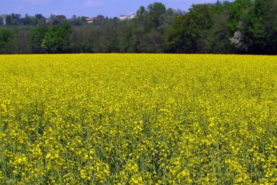 La biomasse, une énergie renouvelable à potentiel